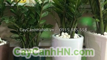 Cay-van-nien-thanh-leo-cot-1jpg- Front Page
