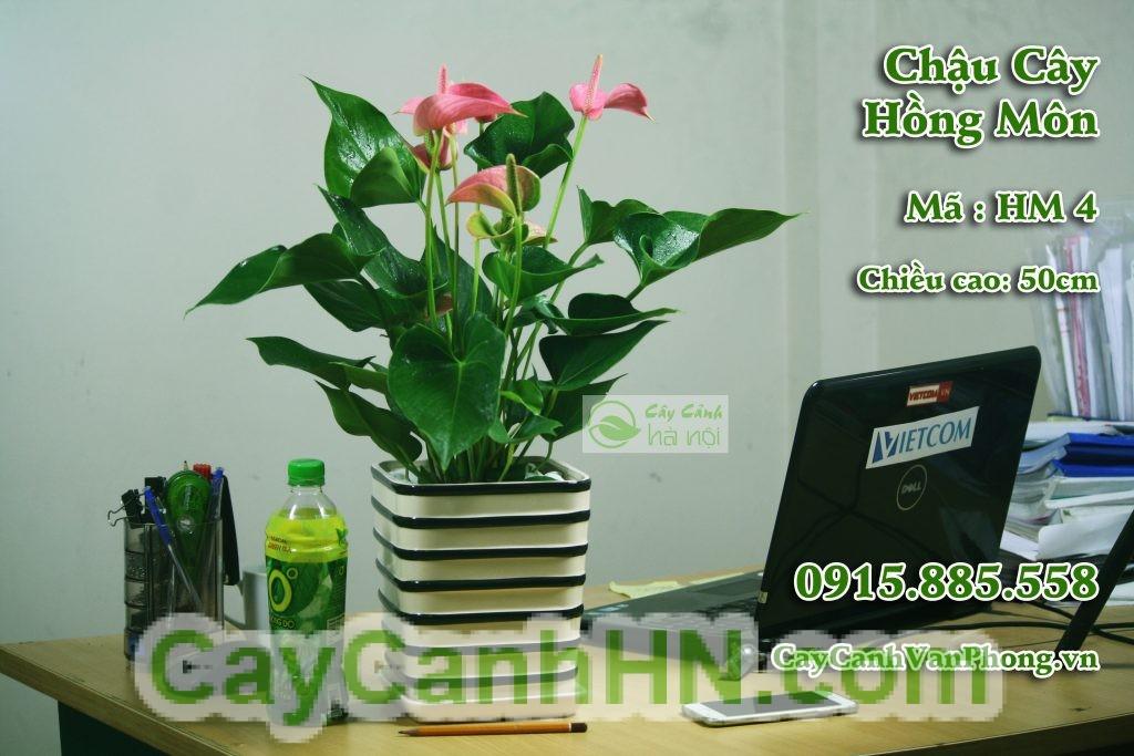 hm3-1024x683 Cây Hồng Môn Ý Nghĩa Phong Thủy Và Hướng Dẫn Cách Chăm Sóc Cây